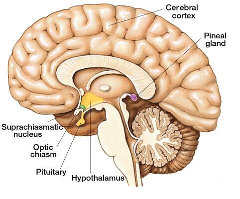 Brain boost activities