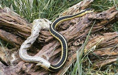 http://ericasodos.wordpress.com/2012/12/, snake shedding skin