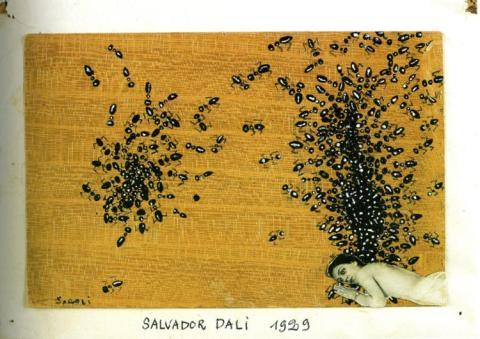 the-ants, Dali, site credit: http://www.wordsarehard.net/2012_05_01_archive.html