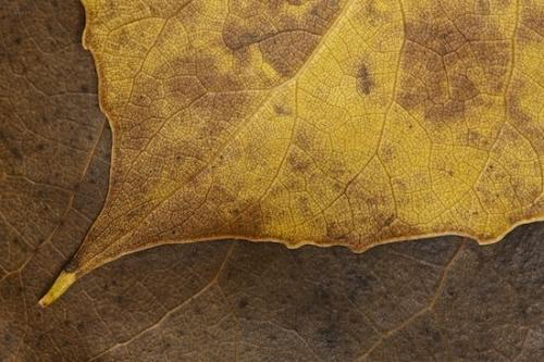 Leaves Explored, by: Byron Jorjorian, site credit: www.byronjorjorian.com/detail/6504.html