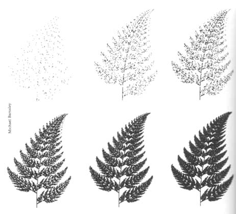 fractal ferns