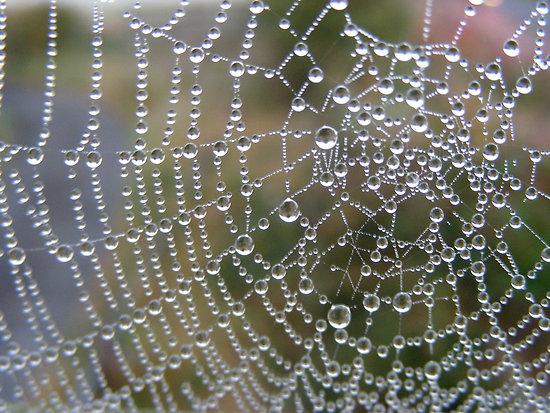 indra's net, dewey spiderweb