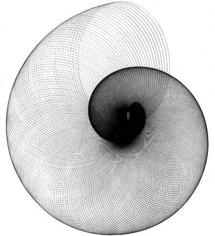 shadow, shell, golden ratio, golden mean