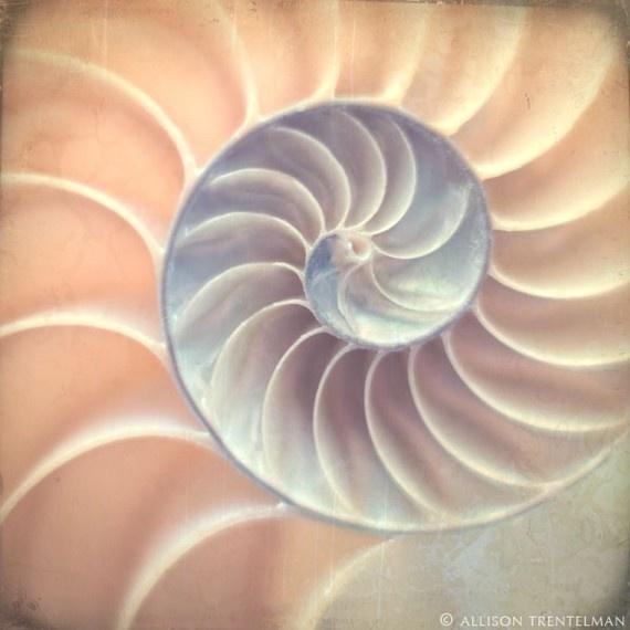 fibanocci spiral