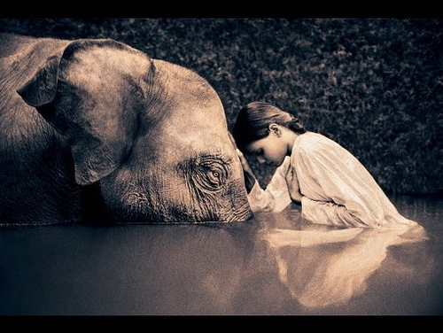 ashes to snow, elephant, gregory colbert, empathy art