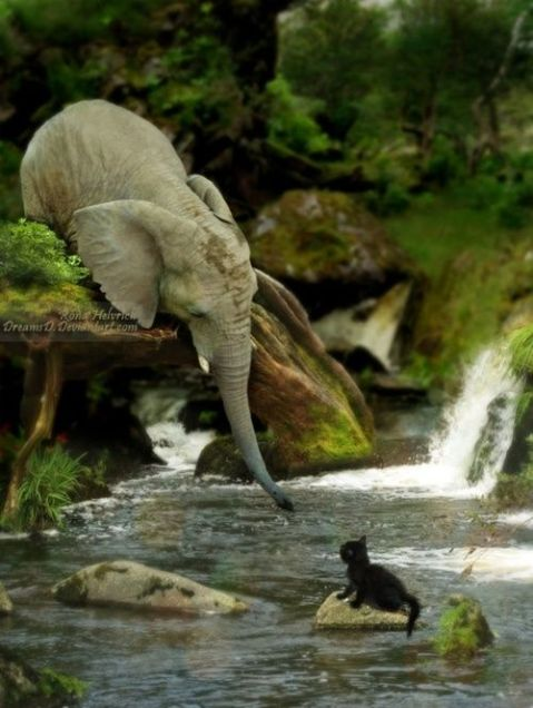 http://madebyrona.deviantart.com/, animals helping other animals, elephant rescuring kitten, compassion, empathy