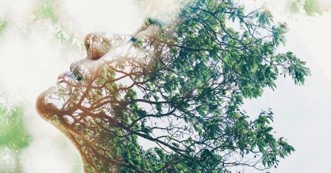 plant-neurobiology-feature