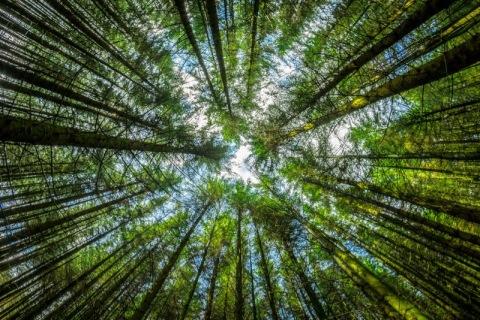 trees21-2
